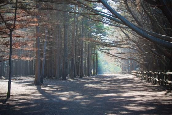 Cypress Groves at Moss Beach