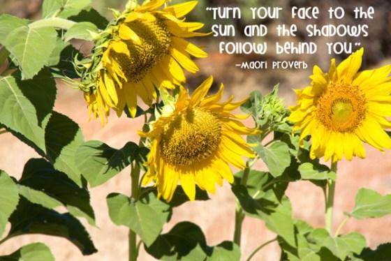 Sunflower Row Quote Cheerfulness Joy Happiness