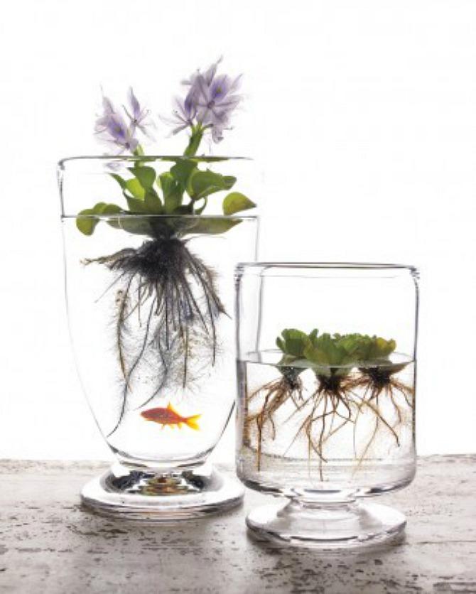 #aquatic plant