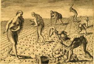 Mostly men tilling the soil and women using a coa, or digging stick, for planting.