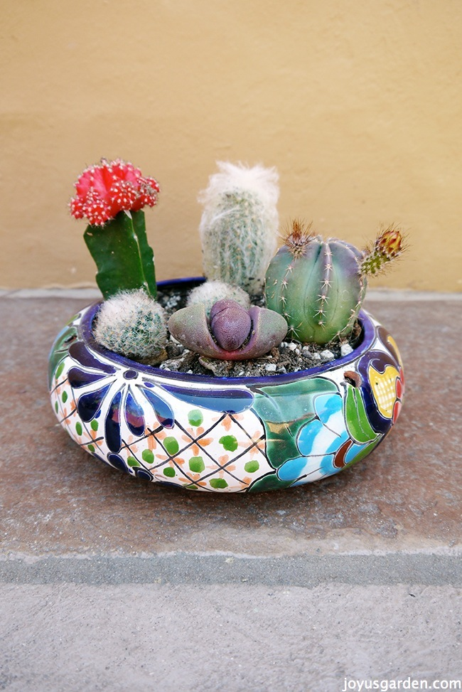 My Secret Weapon For Planting A Cactus Dish Garden
