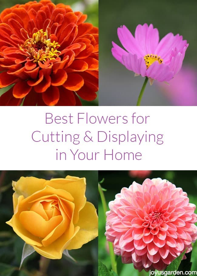 best flowers for cutting