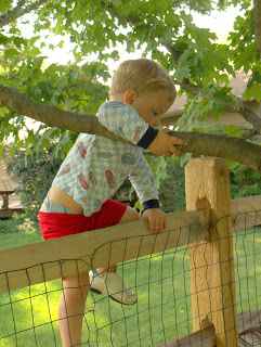 little boy climbing up a fence into a tree
