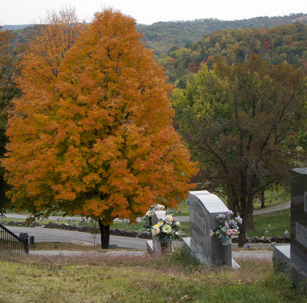 photo of autumn-colored maple tree in Riverview Cemetery, Louisiana, Missouri