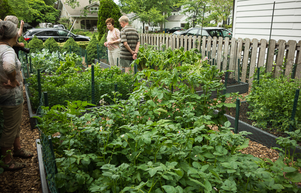 Suburban Vegetable Garden