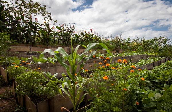 Organic farm in Cuba