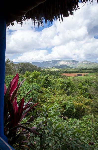 Organic farm in Pinar del Rio, Cuba