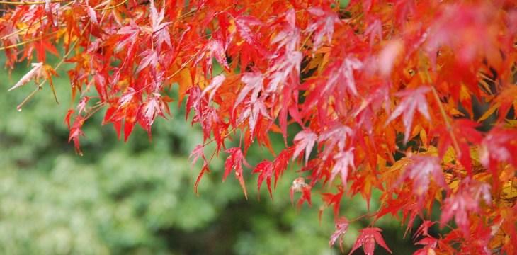 Осеннее путешествие в три японских столицы 21-28 ноября 2010 г.