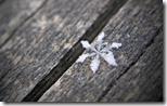 sneg 1