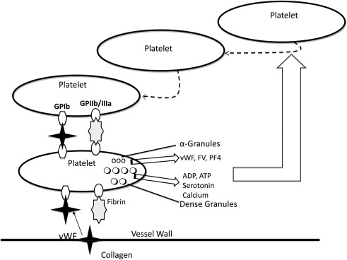 Platelet Function Disorders and Menorrhagia in Adolescents