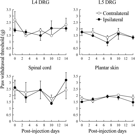 Overexpression of GDNF in the Uninjured DRG Exerts