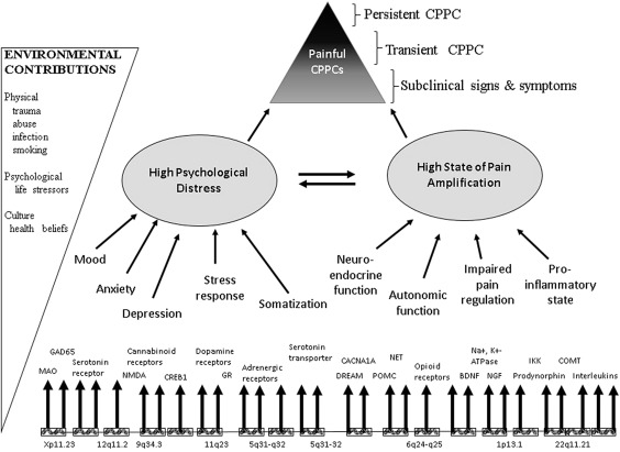 Overlapping Chronic Pain Conditions: Implications for
