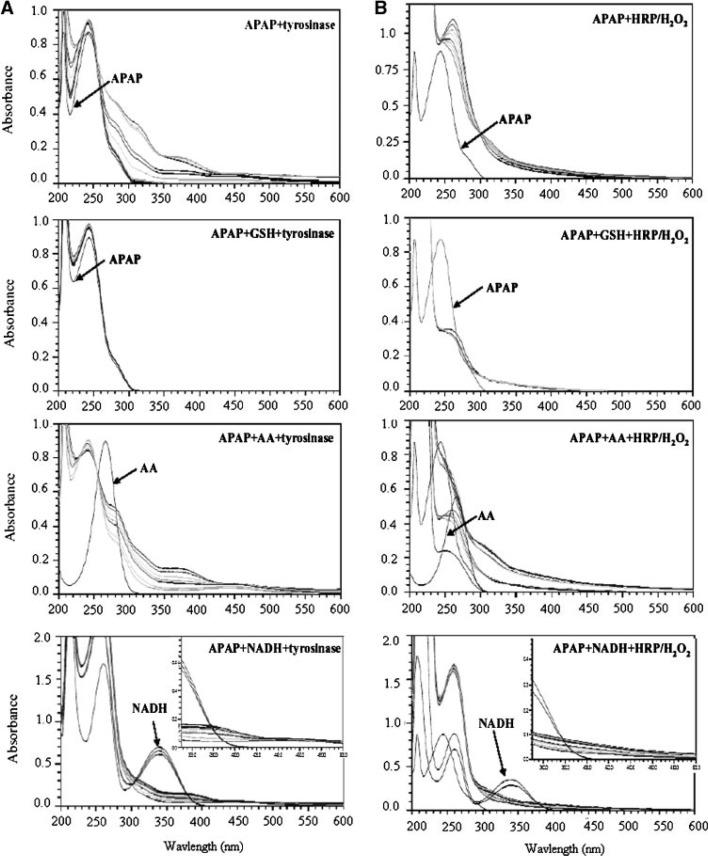 Biochemical Mechanism of Acetaminophen (APAP) Induced