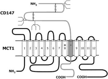 Molecular Features, Regulation, and Function of