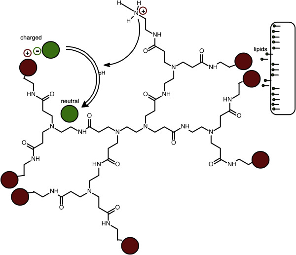 Poly(amidoamine) Dendrimers as a Pharmaceutical Excipient