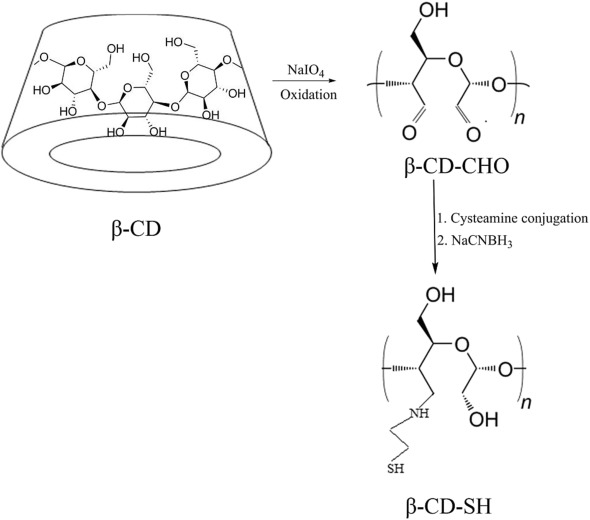 Thiolated Cyclodextrin: Development of a Mucoadhesive