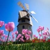 Fotos de tulipanes en Holanda