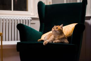 An orange cat on a green chair. It's got big, beautiful eyes and a kind face. Cats can be a boon or a problem when it comes to temporary housing, depending on your allergies.