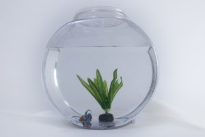 A bowl with fish, water and a plant in it.