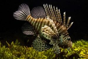 A nice looking aquarium fish