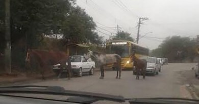 Cavalos invadem a rua Atibaia