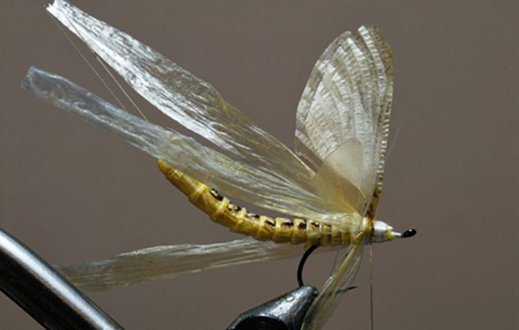 Fly Tying Wings Amp Wing Materials J Stockard