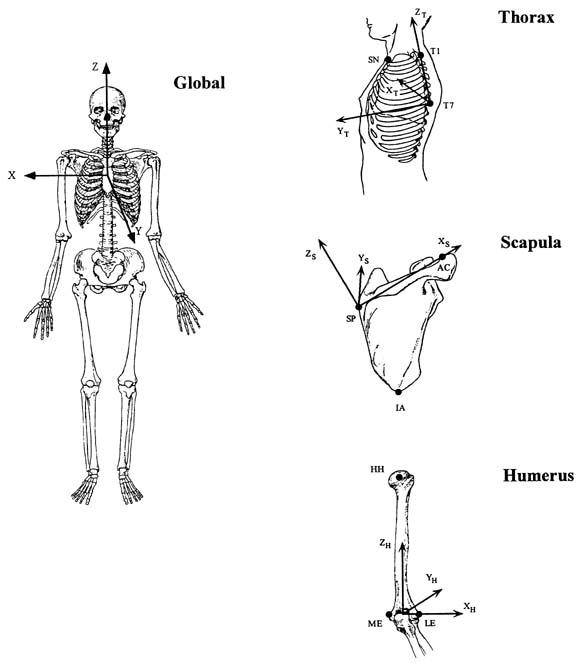 Direct 3-dimensional measurement of scapular kinematics