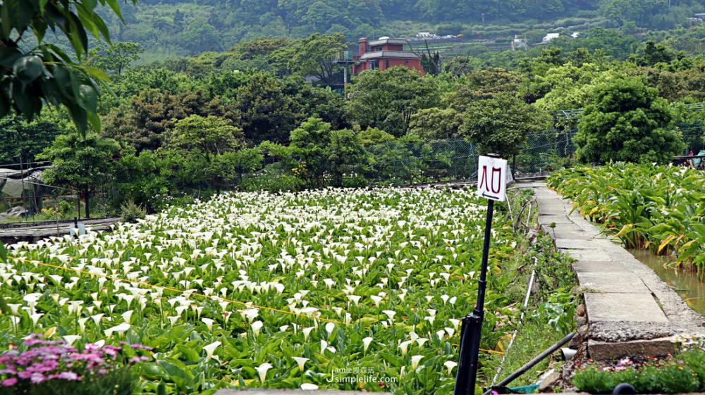 2021初春浪漫花季!朝聖雙北7個夢幻賞花景點 陽明山竹子湖海芋季