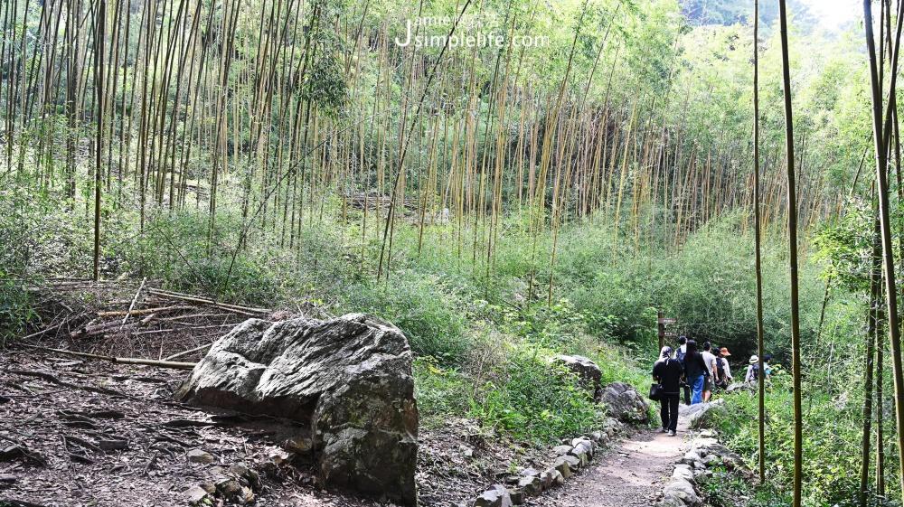 110年兒童清明連假交通前線資訊 八仙山國家森林遊樂區