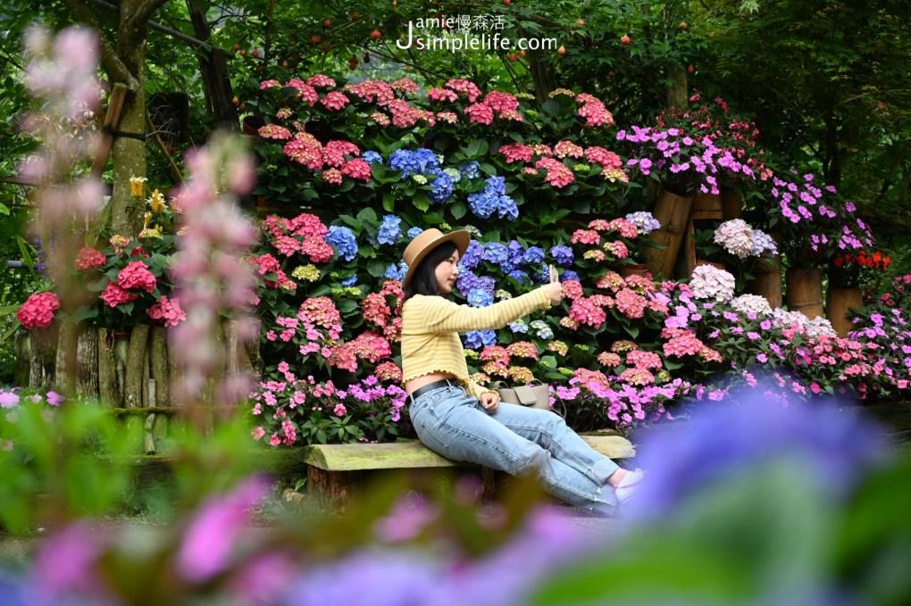 苗栗南庄「碧絡角花園咖啡」庭院繡球花