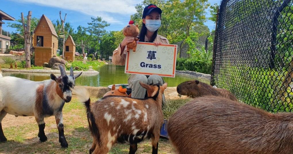 新竹六福村休園不休息!保育員轉當網紅,帶動物線上賣萌