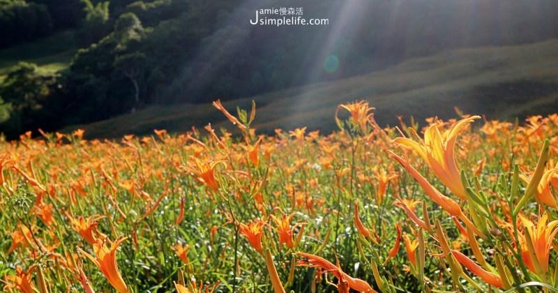 花蓮夏日!赤科山金針花海,9月盛開美景
