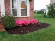 After clean up and mulching