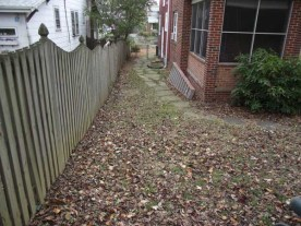 Before Leaf Removal in Silver Spring