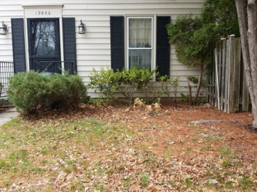 Before Leaf Removal in Montgomery Village