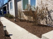 After Clean Up and Mulching in Ijamsville Maryland