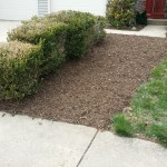 After Clean Up and Mulching in North Potomac Maryland
