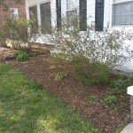 After Clean Up and Mulching in Takoma Park Maryland