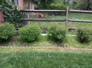 Before Weeding a Flower Bed in Montgomery Village Maryland