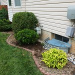 After Shrub Replacement in Gaithersburg Maryland