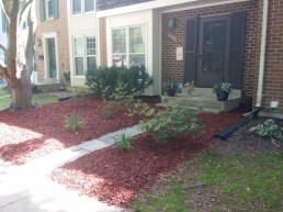 After Debris Clean Up, Hedge Trimming, Weeding, Mulching, by JSV Lawn Care Service, JSV Lawns, JSV Lawns of MD. Lawn Care, Landscaping, Clean Up, Montgomery Village, Montgomery County, Maryland
