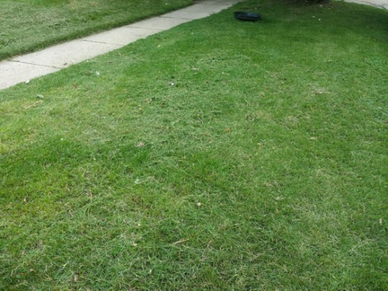 After Debris Clean Up by JSV Lawn Care Service, JSV Lawns, JSV Lawns of MD. Lawn Care, Landscaping, Clean Up, Weeding, Weed Pulling, Aspen Hill, Montgomery County, Maryland