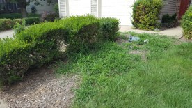 Before Weeding and Clean Up by JSV Lawn Care Service, JSV Lawns, JSV Lawns of MD. Lawn Care, Landscaping, Clean Up, Weeding, Weed Pulling, Montgomery County, Maryland, North Potomac