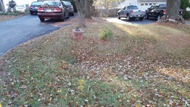 Before Leaf Removal, Clean Up by JSV Lawn Care Service, JSV Lawns, JSV Lawns of MD. Lawn Care, Landscaping, Clean Up, Germantown, Montgomery County, Maryland