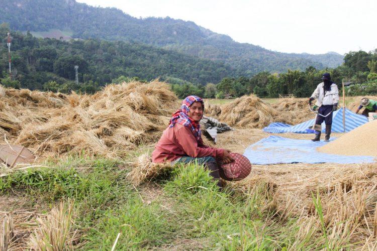 Jolie rencontre dans les rizières de Mae Lana