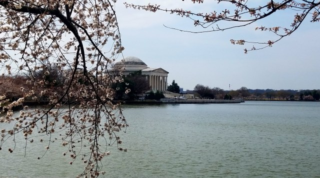 Jefferson Memorial and Cherry Blossoms - 03242017