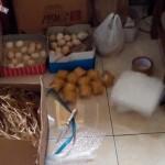 Telur Ayam Hias Pesanan Pak Fulaih Banjarbaru Kalimantan Selatan dengan Komposisi Telur Cemani, Telur Mutiara, Telur Kalkun Putih serta Telur Kalkun