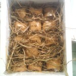 Galeri Foto Pengiriman Telur Ayam Hias