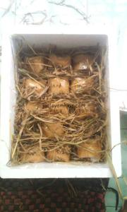 pengiriman telur menggunakan sterofoam