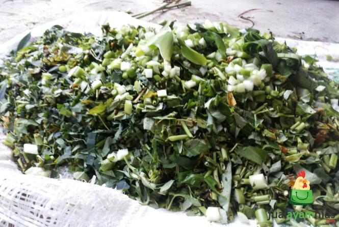 Potogan Kangkung, Daun Pepaya dan Enceng Gondog